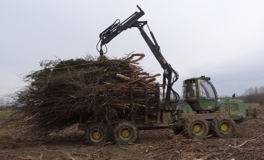Strojna sečnja rastišču neprimerne drevesne vrste – rdečega bora, marec 2015.