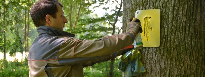 Označevanje dreves